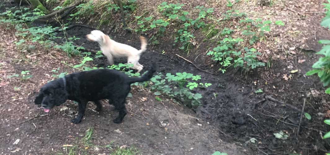 The Boys playing in the woods